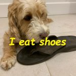 I eat shoes