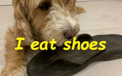 I Eat Shoes. Stories from Covid-19 Lockdown